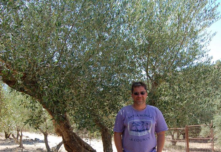 Ich unterm Olivenbaum