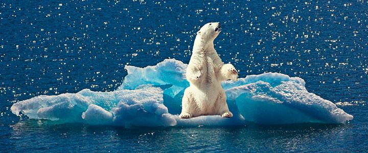 Verzweifelter Eisbär auf kleiner Eisscholle